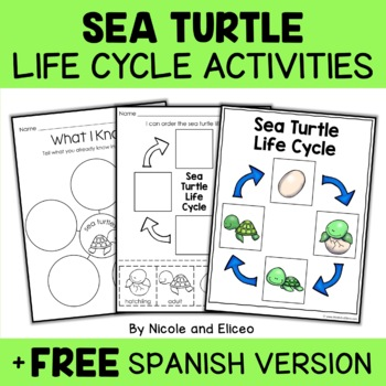 Vocabulary Activity - Sea Turtle Life Cycle