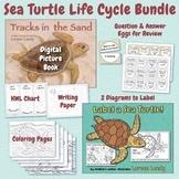Sea Turtle Life Cycle Bundle