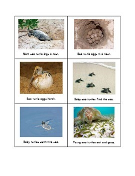 Sea Turtle Life Cycle Cards