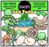 Sea Turtle Life Cycle Clip Art Bundle {Educlips Clipart}
