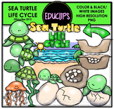 Sea Turtle Life Cycle Clip Art Set {Educlips Clipart}