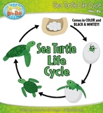 Sea Turtle Life Cycle Clipart {Zip-A-Dee-Doo-Dah Designs}