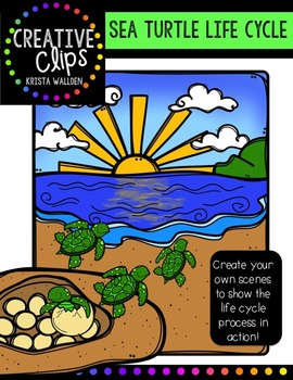 Sea Turtle Life Cycle {Creative Clips Digital Clipart}