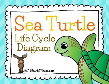 Sea Turtle Life Cycle Diagram