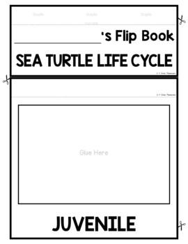 Sea Turtle Life Cycle FLIP Book