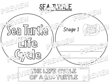 Sea Turtle Life Cycle Factball and Comprehension Sheet