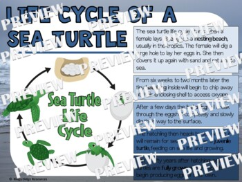 Sea Turtle Life Cycle Factball and Fact Sheet