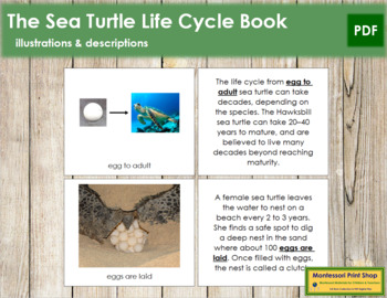 Sea Turtle Life Cycle Nomenclature Book