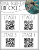 Sea Turtle Life Cycle {QR Codes}