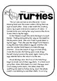 Sea Turtle Life Cycle Story