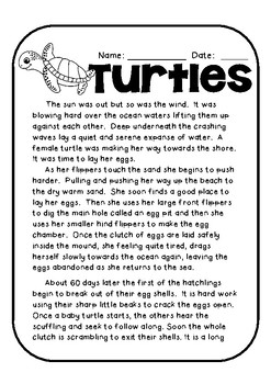 Sea Turtle Life Cycle Story