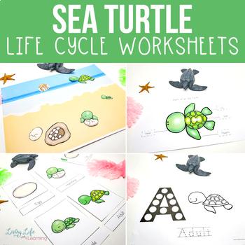 Sea Turtle Life Cycle Worksheets