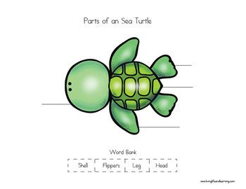 Sea Turtle Life Cycle Worksheets - FREEBIE