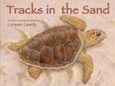 Sea Turtle Life Cycle book