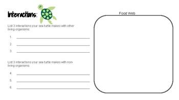 Sea Turtle Research Guide