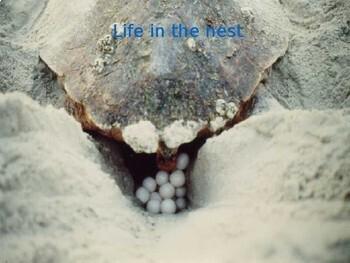 Sea Turtle Survival Game