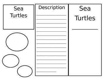 Sea Turtle Trifold