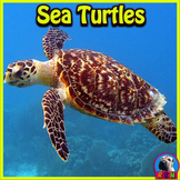 Sea Turtles - PowerPoint & Activities