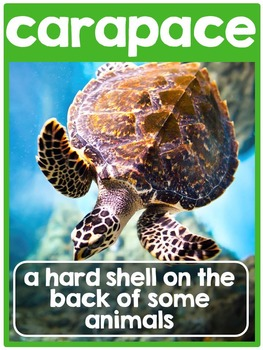 Sea Turtles {A Complete Non-fiction Resource}