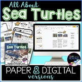 Sea Turtles Differentiated *DIGITAL AND PAPER* Reading Com