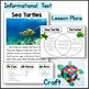 Sea Turtles Kindergarten Science NGSS