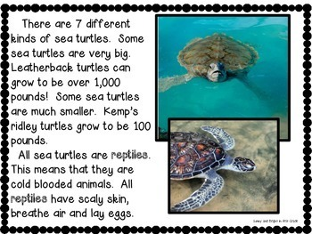 Sea Turtles Life Cycle & More | Nonfiction Resource | Close Reading Unit