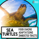 Sea Turtles Life Science Unit