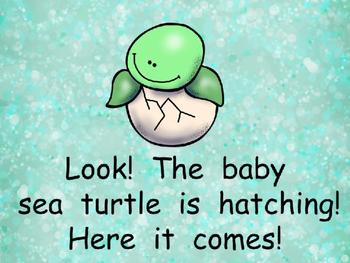 Sea Turtles- Nonfiction Shared Reading- Level C Kindergarten Science