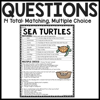 Sea Turtles Reading Comprehension; Ocean Creatures; Leatherback; Green