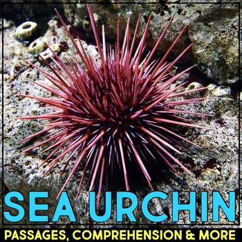 Sea Urchin: Informational Article, QR Code Research & Fact Sort