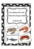 Sea animals flashcards (Real images) - Les animaux de la m