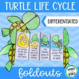 Sea turtle life cycle folding craft