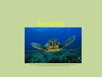 Sea turtle powerpoint