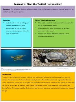 Sea turtle unit