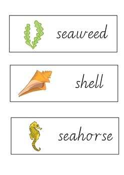 Sea/Ocean Sight Words