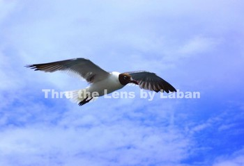 Seagull Flying Stock Photo #171