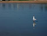 Seagull Picture