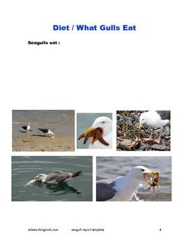 Seagull Report Template