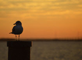 Photo Products - Seagull Sunrise and Free Teacher Appreciation