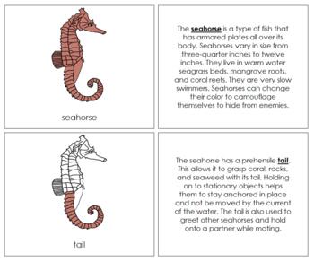 Seahorse Nomenclature Book