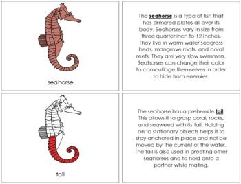 Seahorse Nomenclature Book - Red