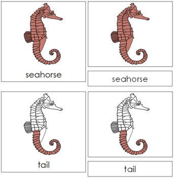 Seahorse Nomenclature Cards