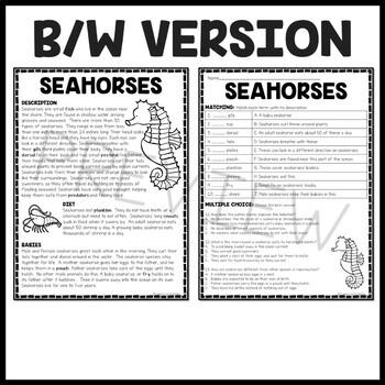 Seahorse Reading Comprehension; Ocean Creatures; Summer; Seahorses; Sea Horse