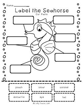 Seahorse Report Guide