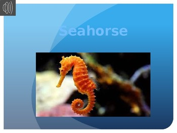 Seahorse information report powerpoint