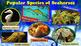 Seahorses - PowerPoint & Activities