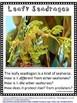 Seahorses Nonfiction Reading and Writing Fun