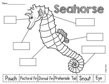 Seahorses Unit
