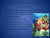 Seahorses powerpoint
