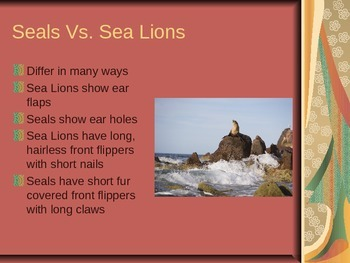 Seals, Sea Lions, and Walruses